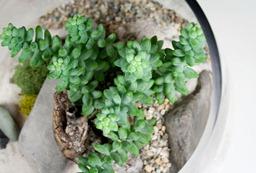 succulent02b
