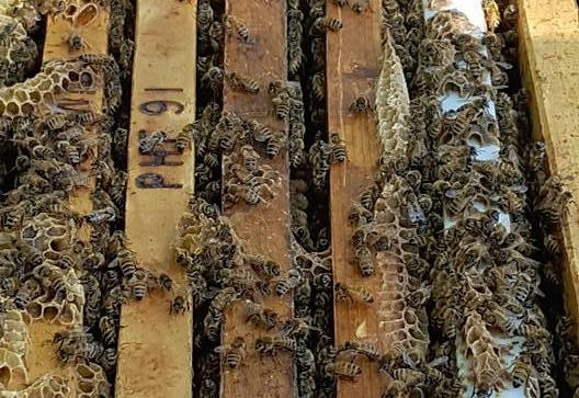ABC Bees - An Urban Honey Experience victoriadaytoday.com