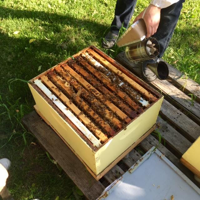 ABC Bees: An Urban Honey Experience